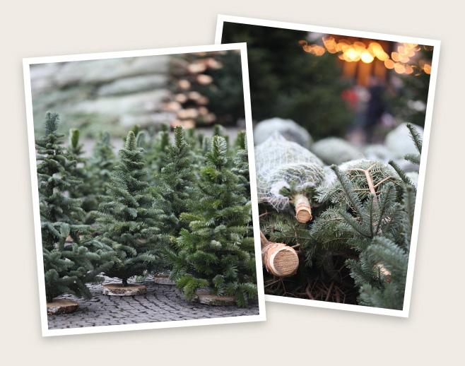 Weihnachtsbaum kaufen ludwigshafen